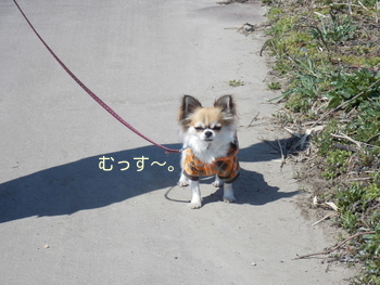 お父さんとハヤテの散歩3