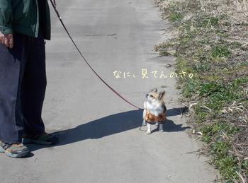 お父さんとハヤテの散歩2