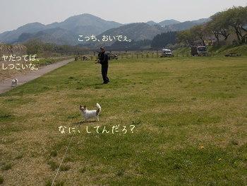 おとうさんとさくらの散歩2