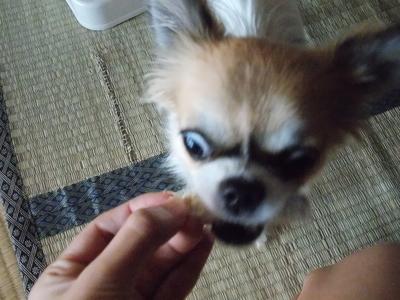 恐い顔で食べるハヤテ4