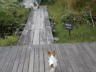 板張りの道を歩くハヤテ