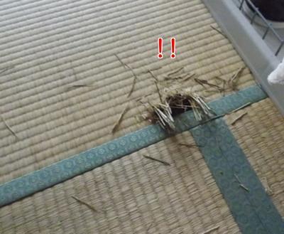 穴をあけられた畳