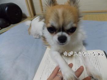 読みかの本の上でご飯をねだるハヤテ3