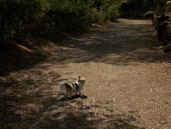 ハヤテの1人散歩