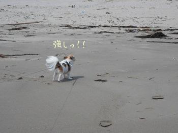 海のチワワーズ2
