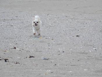 海で走るさくら