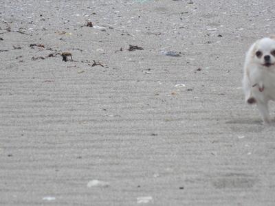 海で走るさくら3