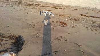 海のチワワーズ7