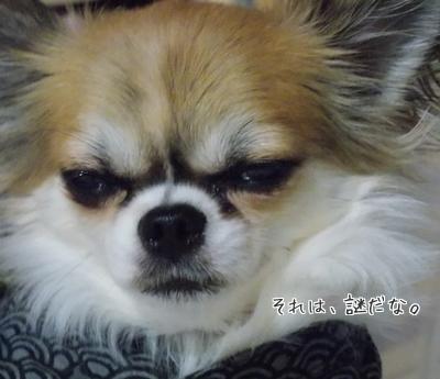 歌舞伎顔のハヤテ
