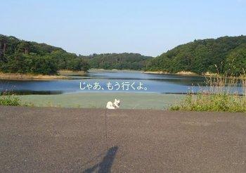 池とさくら