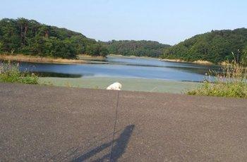 池とさくら2