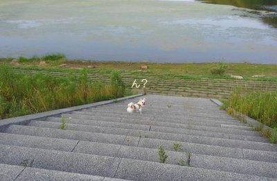 池とさくら4