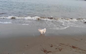海を走るさくら3