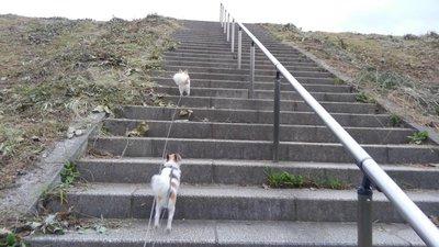 階段を上るハヤテ