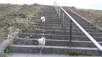 階段を上るハヤテ2