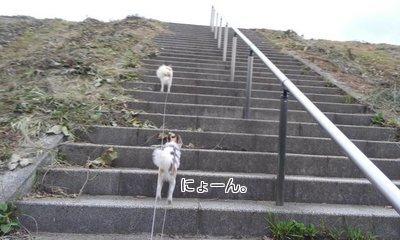 階段を上るハヤテ3