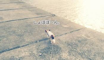恐がりハヤテ4
