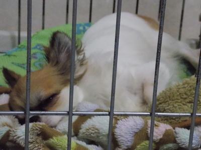 眠たげなハヤテ