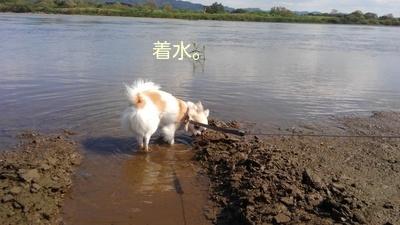 川遊び中のさくら