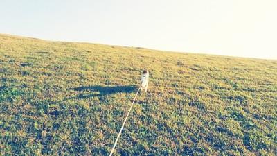 丘を駆け上がるハヤテ