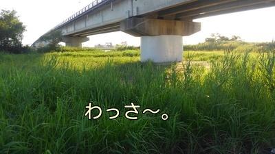 草ぼうぼう2
