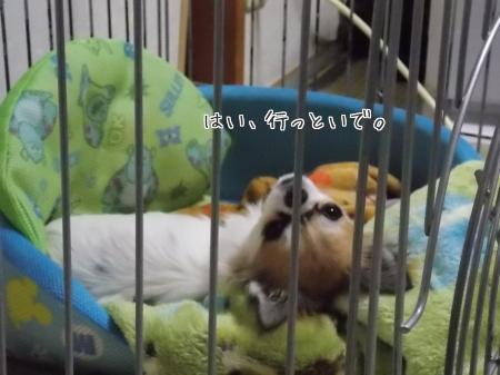 寝ながらハヤテ