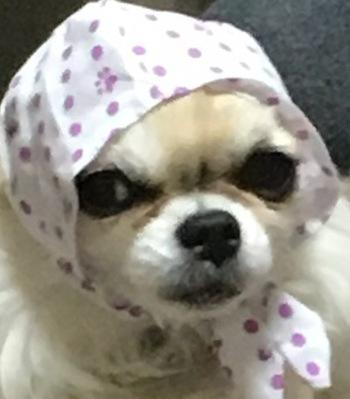 頭巾ハヤテ