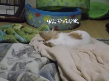 外で寝るさくら2
