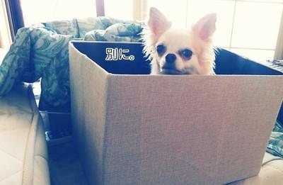 箱に入ってるさくら2