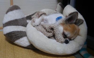 寝てるハヤテ