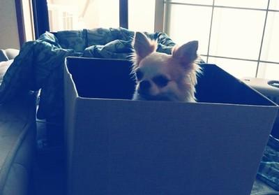 箱に入ってるさくら