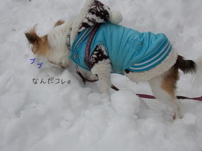 雪遊び中のチワワーズ2