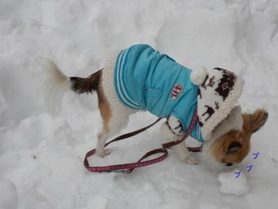 雪遊び中のチワワーズ5