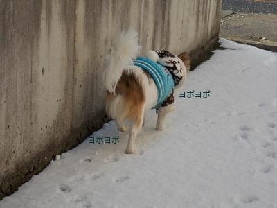 雪とハヤテ5