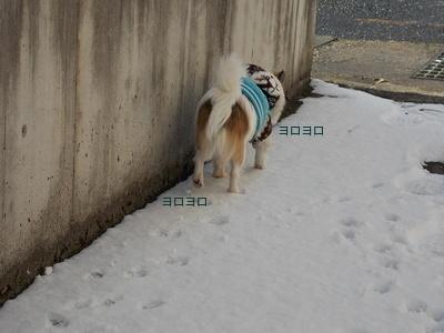 雪とハヤテ6