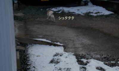 雪とさくら3