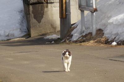 ノラ猫さん2
