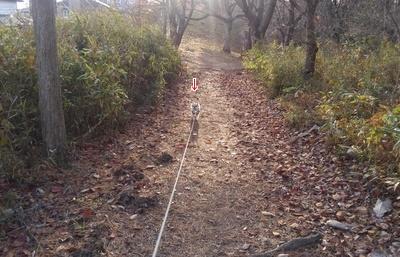散歩中のハヤテ2