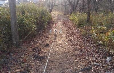 散歩中のハヤテ3