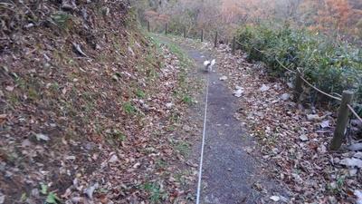 散歩中のハヤテ6