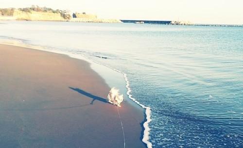 海のさくら2