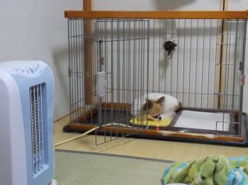 リフォームした部屋で寝るハヤテ