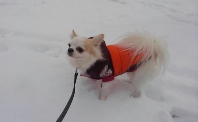 雪とさくら2