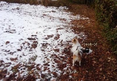 雪とハヤテ7