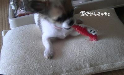 おもちゃとハヤテ6