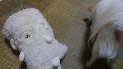 羊とさくら2