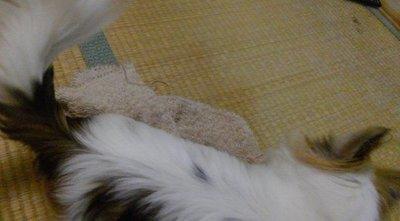 毛布とハヤテ6