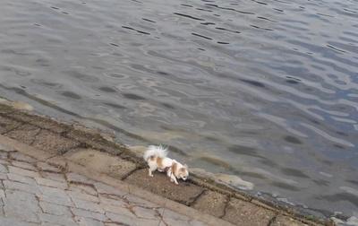 湖のさくら