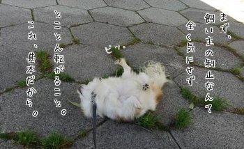ダンシングハヤテ4
