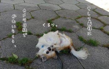 ダンシングハヤテ9